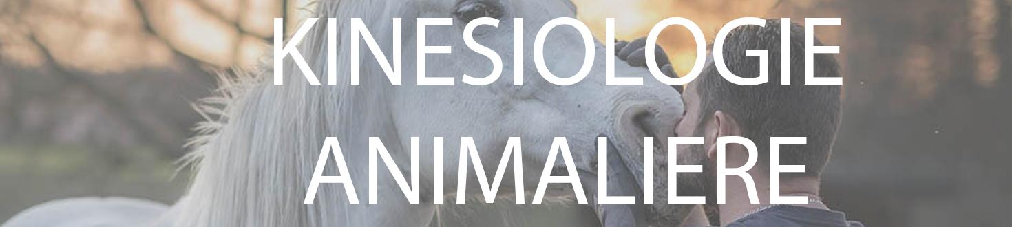 kinesiologie-animaliere-energaia